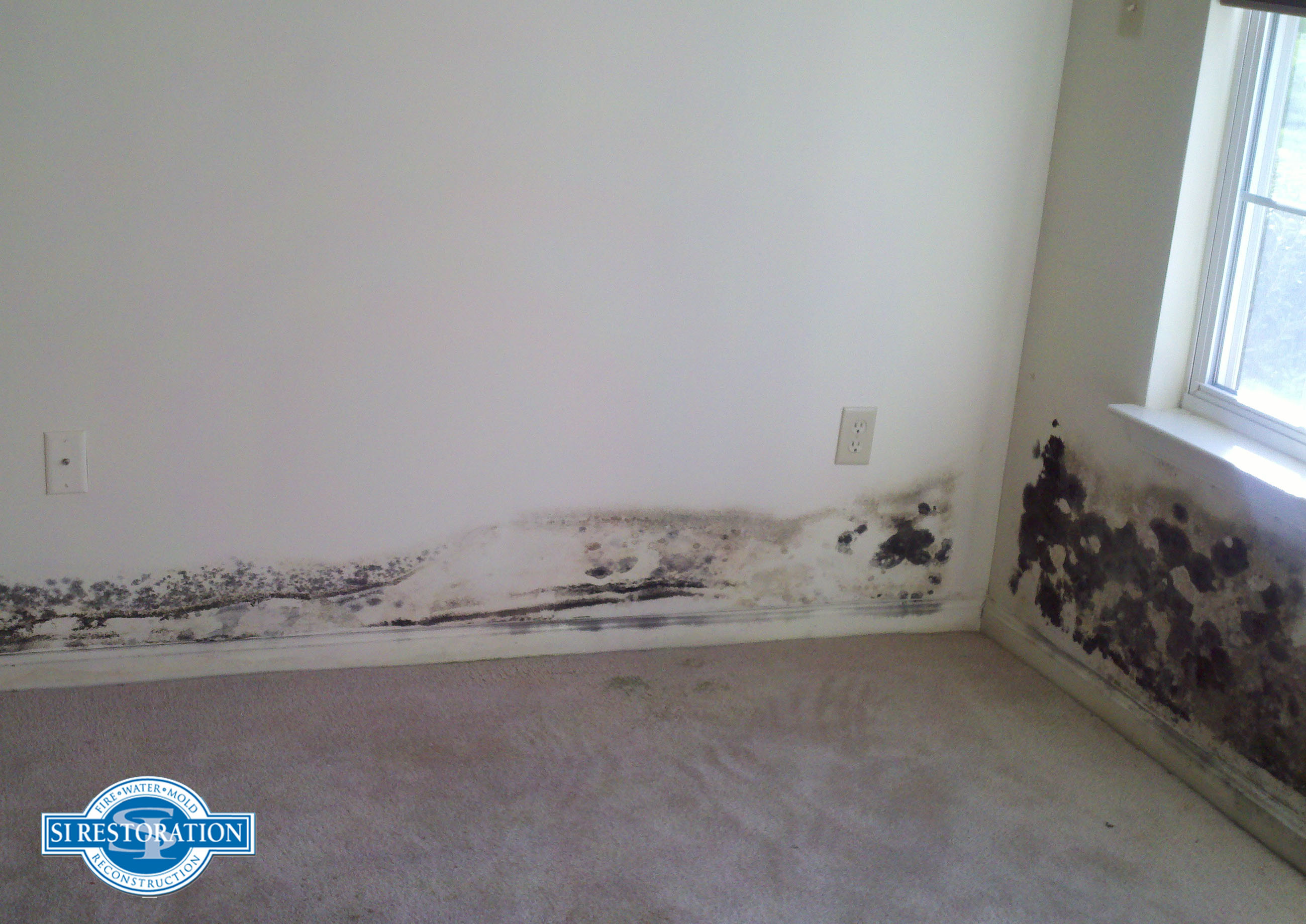 Maryland Black Mold Removal