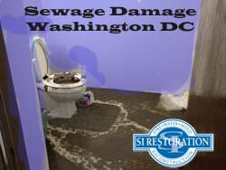 Washington DC Sewage Damage